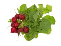 Whole organic radishes bunch. Top view of a bunch of organic radishes with greens isolated on a white background Royalty Free Stock Photo