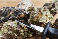 Whole oysters with a knife. On a wooden board Stock Photos