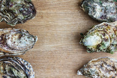 Whole oysters on wood stock photos