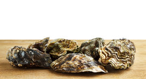 Whole oysters on a wooden surface. Isolated on white with copyspace Stock Images