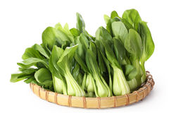 Whole pak choi (Brassica rapa) Stock Images