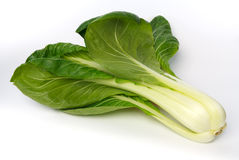 Whole pak choi (Brassica rapa) Stock Photography