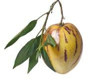 Whole pepino fruit Royalty Free Stock Image