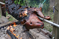 Whole pig roasting over a fire Stock Photos