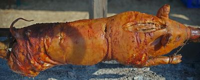 Whole pig on stick roasting under open fire stock photo