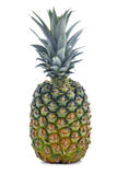 Whole pineapple Royalty Free Stock Photos