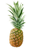 Whole pineapple Stock Image