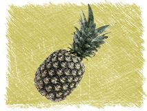 Whole pineapple skech drawing. Top view, copy space. Stock image royalty free illustration