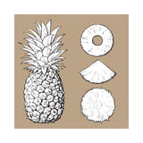 Whole pineapple and slices - peeled, unpeeled, wedge, vector illustration Royalty Free Stock Photography