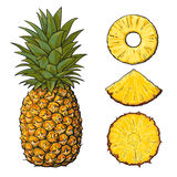Whole pineapple and slices - peeled, unpeeled, wedge, vector illustration Stock Photo