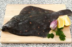 Whole plaice. A raw whole plaice fish with lemons and parsley Stock Photography
