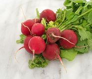 Whole radishes on a cutting board. Several radishes with greens on a gray marble cutting board Stock Images