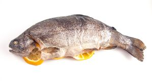 A Whole Rainbow Trout Isolated on a White Background. Whole Rainbow Trout Isolated on a White Background stock photography