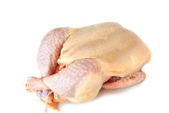 Whole raw chicken. Isolated on white Stock Photography