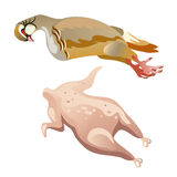 Whole raw chicken isolated, vector food Stock Photos