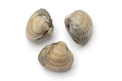 Whole raw fresh cockles Stock Photography