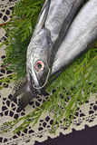 Whole and raw hake in tray. Two fresh European hake fishing hook, two whole and raw hake in tray Stock Photo
