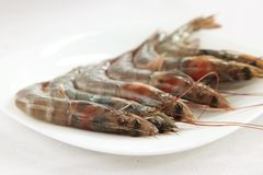 Whole raw prawns Stock Image