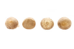 Whole raw Shitake Mushrooms Stock Photography