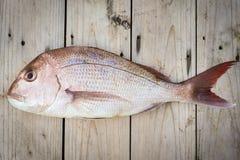 Whole Raw Snapper Fish Royalty Free Stock Photos