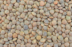 Whole red lentil seeds Stock Photography