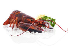 Whole red lobster on ice Royalty Free Stock Photo