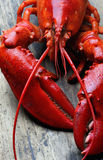 Whole red lobster on wood Royalty Free Stock Images