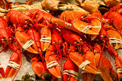 Whole red lobsters Royalty Free Stock Images