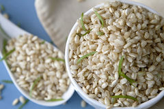 Whole rice. An image of whole rice in a cup stock photos