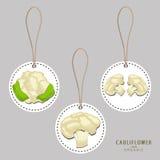 Whole ripe vegetable cauliflower Stock Image