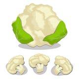 Whole ripe vegetable cauliflower Royalty Free Stock Images