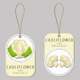 Whole ripe vegetable cauliflower Stock Images