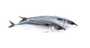 Whole round blue mackerel on white Royalty Free Stock Photos