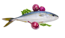 Whole round fish yellowtail, dill, parsley and red onion Stock Images