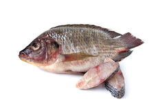 Whole round fresh Tilapia fish on white Royalty Free Stock Image
