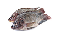 Whole round fresh Tilapia fish on white Stock Photo