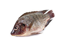 Whole round fresh Tilapia fish on white Stock Image
