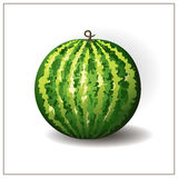 Whole round watermelon on the white background. Isolated tropical fruit illustration. Green watermelon. Vector. Watermelon berry. Stock Photos