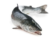 Whole salmon Stock Images
