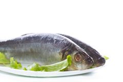 Whole salted herring with lettuce Royalty Free Stock Image