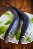 Whole salted herring with lettuce Stock Photography