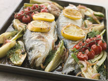 Whole Sea Bass Roasted with Fennel and Lemon. Pan of Whole Sea Bass Roasted with Fennel Lemon Garlic and Cherry Tomatoes on the Vine stock images