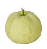 Whole sinfgle fresh guava Stock Photos