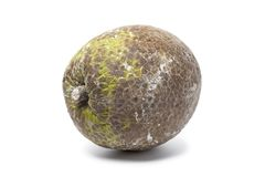 Whole single breadfruit Royalty Free Stock Image