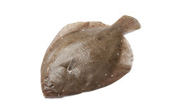 Whole single Brill fish Royalty Free Stock Photography