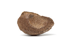 Whole single fresh Brazil nut Royalty Free Stock Photography