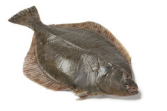 Whole single fresh  European flounder Stock Photos
