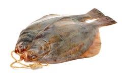 Whole single fresh flounder Royalty Free Stock Image