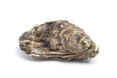 Whole single fresh raw oyster. On white background Stock Images
