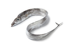 Whole single fresh ribbondfish Stock Photos